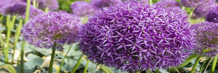 Blumen Lieferservice Kronberg