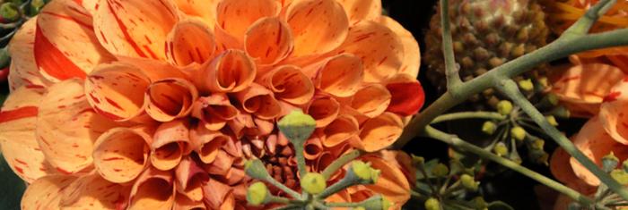 Pflanzen und Blumen Taunus