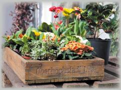Blumen_Kronberg