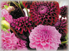 Blumenladen Kronberg Hoch Taunus Kreis